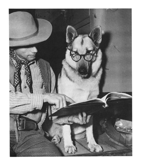 Rin Tin Tin reading a book
