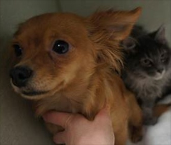 Beignet the dog adopted Gumbo the kitten after they were abandoned by their owners.