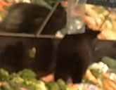 Bear in produce section at Alaska grocery story