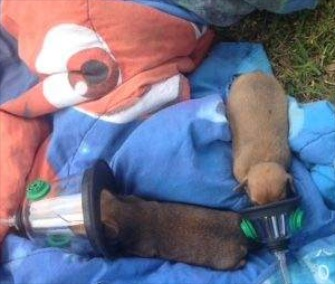 Flagler County, Florida, firefighters used pet oxygen masks to save two puppies rescued from a house fire.