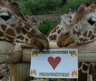 Giraffes at Colorado's Cheyenne Mountain Zoo thank firefighters.