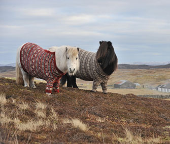 Shetland ponies wear sweaters in an ad campaign for Scotland.