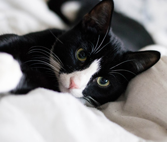Cat staring at human in bed