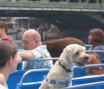 Chicago's only Canine Cruise