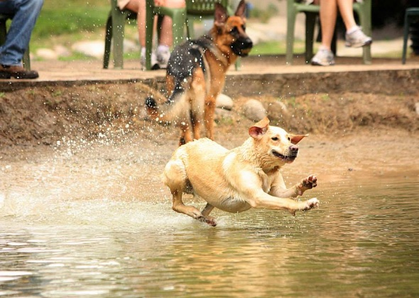 dog parks in michigan