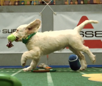 One of the athletes in Puppy Bowl XI sprints for the goal.