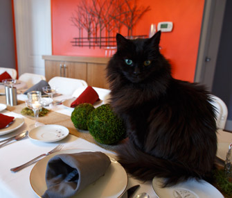 Cat on dinner table