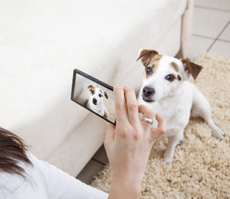 smart phone taking pictures of dog