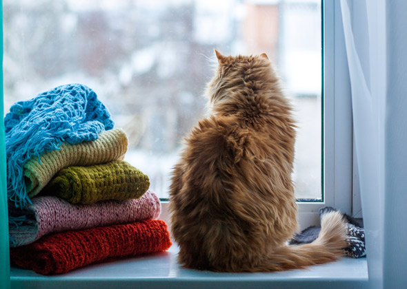 6 Urban Dangers That Can Harm Your City Pet