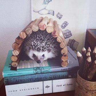 WeeklyFluff Hedgehog