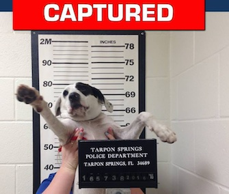 "A wandering puppy named Willow was brought to the police department and ""booked"" this week."