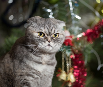 Cat sitting by Christmas tree