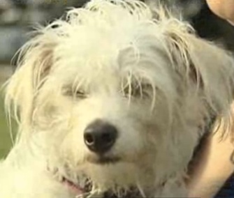 Lolly is credited with waking her owner before flames engulfed her Texas home.