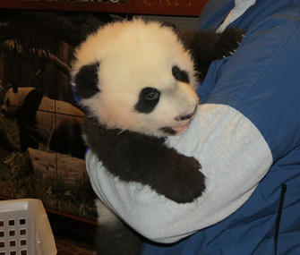 Bei Bei will debut in January