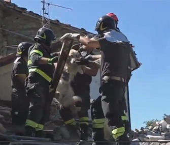 Dog found after earthquake in Italy