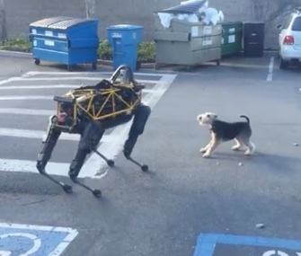 A Terrier wasn't sure what to make of Spot, a robotic dog.