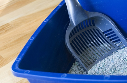 How To Train Older Cat Litter Box