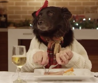 Thirteen dogs and one cat sit down to have a holiday meal for a Freshpet promotional video that's gone viral.