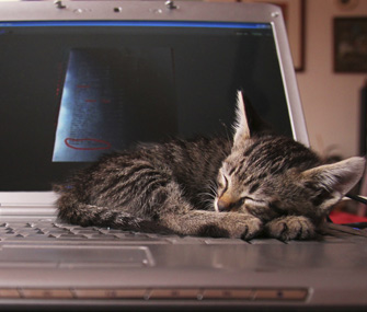 Kitten napping on laptop