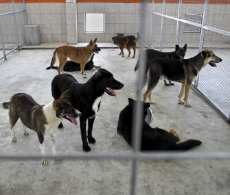 Dogs at a shelter