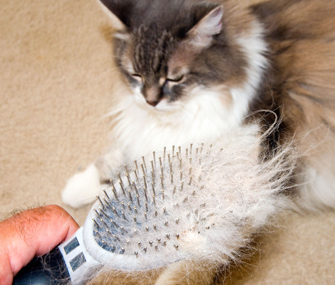 Furry brush and cat