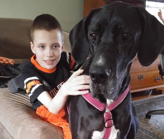 Hunter, 10, has been learning to walk again with the help of Wendy, a Great Dane.