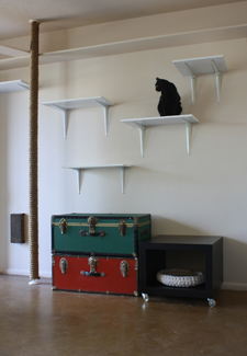 cat superhighway in a home
