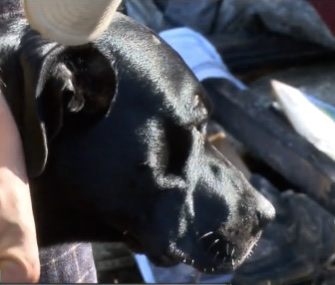 Shadow, a pregnant Lab-Terrier mix, woke up her family when a fire started in their home.