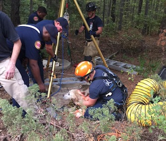 A 10-year-old yellow Lab was rescued from a 40-foot well after he fell in.
