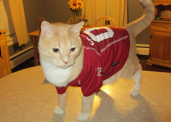 new style 63e87 def57 17 Dogs and Cats Who Are Ready for NFL Football