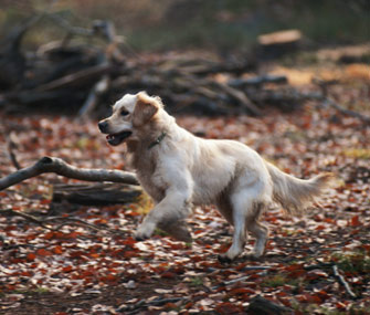 Dog in Fall Leaves