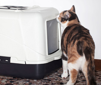 Cat sniffs outside a litterbox