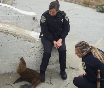 Two San Francisco Police officers helped babysit a stranded sea lion pup until it could be rescued.