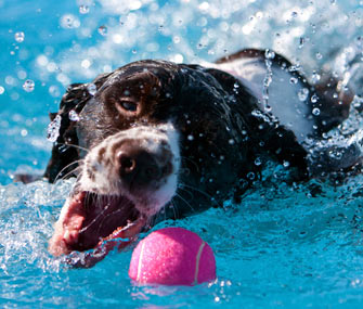 Dog Exercising in the Pool