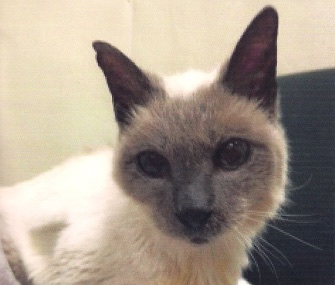 Scooter, a 30-year-old Siamese, is named the world's oldest living cat.