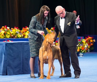 Nathan the Bloodhound and Best in Show Judge Edd E. Bivin