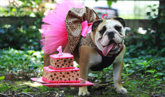 How to Plan the Best Dog Birthday Party