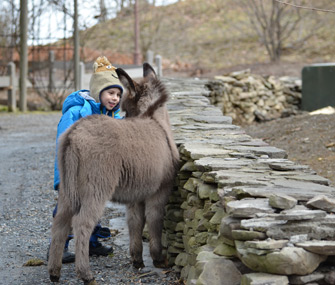 Holly the Donkey and Henry