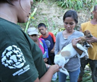 Animal welfare groups are providing vaccinations, care and food for animals impacted by Typhoon Haiyan.