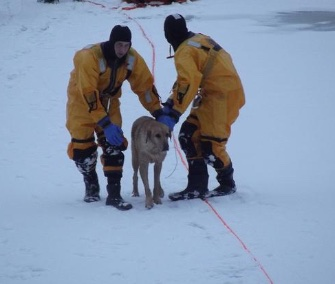 Firefighters saved a 9-year-old Lab and Great Dane mix from an icy lake in Burke, Virginia, Thursday.