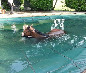 Firefighters and animal services workers came to the rescue of a horse stuck in a pool in Virginia.
