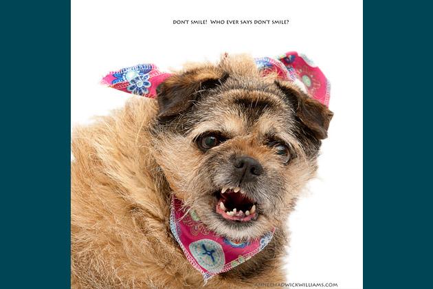 America's Funniest Shelter Dog Blooper Photographs