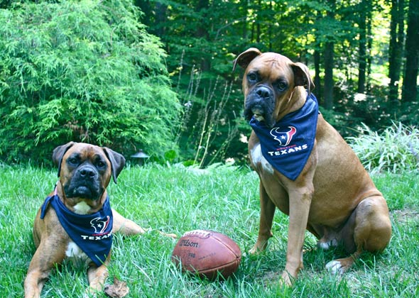 new style b3be9 9638b 17 Dogs and Cats Who Are Ready for NFL Football