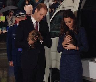 Prince William and the Duchess of Cambridge cuddle with young puppies at a police academy in New Zealand.