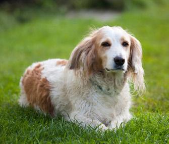 Senior Dog Outdoors