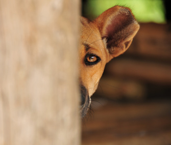 Scared Dog Behind Tree