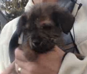 Garby the puppy was saved from a trashcan by a sanitation worker.
