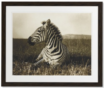 William Sonoma Zebra Print