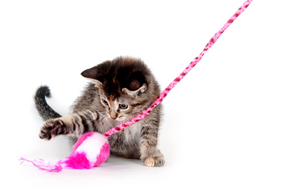 Cat playing with pink and white toy