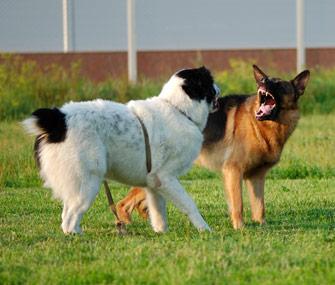 Dogs Teeth Bared